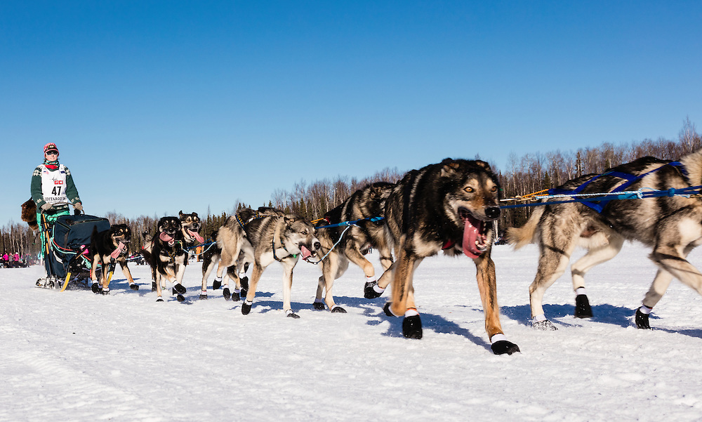 Musher Kristin Knight Pace competing in the 44th Iditarod Trail Sled Dog Race on Long Lake after leaving the restart on Willow Lake in Southcentral Alaska.  Afternoon. Winter.