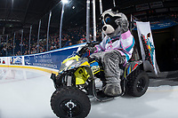 KELOWNA, CANADA - FEBRUARY 7: Rocky Racoon the mascot of the Kelowna Rockets enters the ice on his Polaris quad against the Vancouver Giants  on February 7, 2018 at Prospera Place in Kelowna, British Columbia, Canada.  (Photo by Marissa Baecker/Shoot the Breeze)  *** Local Caption ***