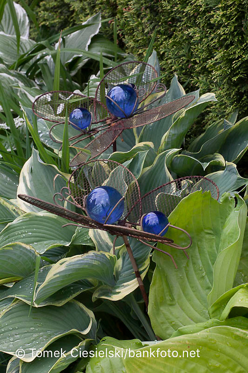 BUTTERFLYS MADE FROM METAL AND BLUE GLASS BETWEEN LEAFES OF HOSTA