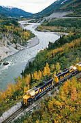 Alaska, Denali National Park. Alaska Railroad train heading north to Fairbanks along the Nenana River in fall.