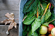 PASO ROBLES, CA- December 5, 2016:  Freshly picked chard and previously harvested apples are just a few of the ingredients that Barbara and Bill Spencer will use to cook their Holiday dinner later in the evening on their beloved Windrose Farm on Monday, December 5, 2016. The Spencer's  purchased Windrose Farm back in 1990 and have since transformed the land into an organic farm that is currently transitioning to biodynamic farming.  (Mariah Tauger /  For the Times)