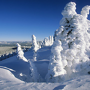Snow-covered pine trees on Two Top Mountain in the Gallatin/Targhee National Forest, Idaho.