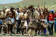 The Zulu Impi arriving on foot before the battle. South Africa. Kwa Zulu Natal. Isandlwana battlefield. .©Zute Lightfoot.