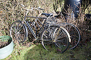 Two old bicycles in garden