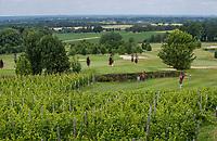 Margraten  - Rijk van Margraten. tee hole 7 . afslaan tussen de druiven/wijnranken.  COPYRIGHT KOEN SUYK