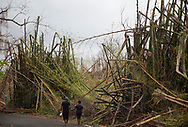 SAN LORENZO, PUERTO RICO - OCTOBER 9, 2017 -   Luis Antonio Mu&ntilde;oz and Maria del Carmen walk along crumbled bamboo trees on road PR-181 in San Lorenza, Puerto Rico, where the center of Hurricane Maria cause some of the most extensive damage .  (Photo/Jos&eacute; Jim&eacute;nez) Through the Iris of Hurricane Mar&iacute;a<br />