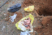 JIUJIANG, CHINA - DECEMBER 22: (CHINA OUT) <br /> <br /> WARNING GRAPHIC CONTENT<br /> <br /> Another Three Abandoned Stillbirths Are Found In Jiujiang<br /> <br /> Another three abandoned stillbirths are dug out from a public park on December 22, 2014 in Jiujiang, Jiangxi province of China. Cleaners of a park discovered eleven abandoned stillbirths when cleaning the park on December 21 which was in south China's Jiangxi province. With the help of cleaners, local policemen and workers of local Sanitary Bureau conducted a further search on the following day and dug out another three stillbirths. Those stillbirths were covered by yellow medical plastic bags and the relative reasons were still being investigated <br /> ©Exclusivepix Media