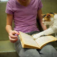 "Kaitlyn Karkoska reads to ""Jingles,"" a cat up for adoption, during ""The Book Buddies Program"" at the Animal Rescue League of Berks County in Birdsboro, PA on February 11, 2014.  Children in grades 1-8 read to the cats as a way to improve their reading skills and gain confidence.  The shelter animals can be a non-evaluative presence that can provide support and comfort to participants without judging them.  Students showed sustained focus and maintained a higher state of awareness, as well as improved attitudes toward school, according to researchers at Tufts University.  Photo taken February 11, 2014.  REUTERS/Mark Makela  (UNITED STATES)"