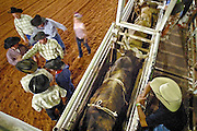19 OCTOBER 2002 - PHOENIX, AZ: Officials and competitors gather in front of the chutes before bull riding at Mr. Lucky's, a popular country bar on Grand Ave near Indian School in Phoenix, Saturday night. Mr. Lucky's has bull riding on Friday and Saturday nights. PHOTO BY JACK KURTZ