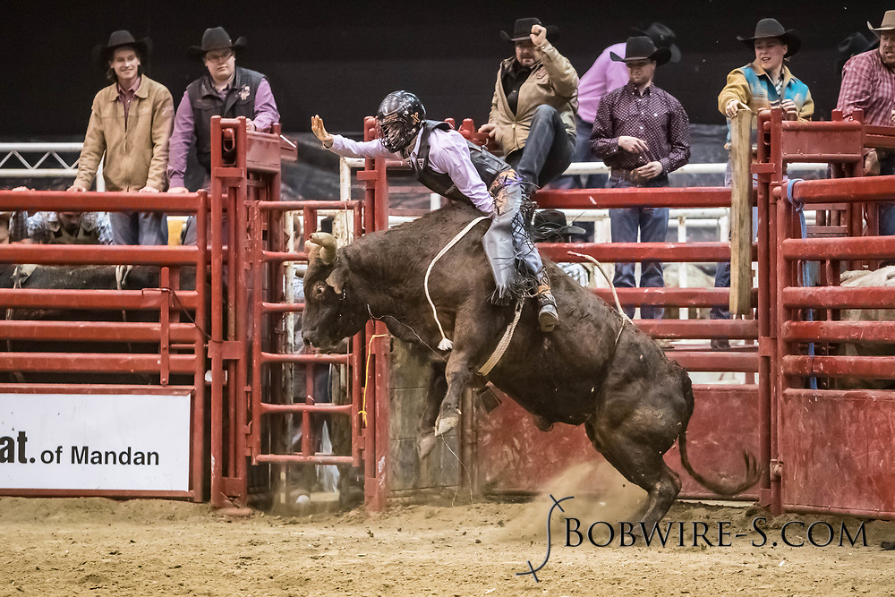 Bull rider Brett Custer rides Bailey Rodeo's 99 Popeye in the first go of the Bismarck Rodeo on Friday, Feb. 2, 2018. He had no score on the ride.