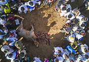 DROUGHT IN ETHIOPIA<br /> <br /> The Borana tribe, part of Oromo people who make up around a third of the Ethiopian population, is suffering from drought for months. Cows are dying, meanwhile many people are complaining the lack of support from the government, thus generating massive uprisings, repressions and killing hundreds of protesters.<br />  Borana live in Kenya, Ethiopia and Somalia with a population of 500,000. They are semi pastoralists. Their life depends on their livestock, which are their only wealth. Their cattle are used in sacrifices and also as dowry or to pay legal fines. For one year, there has been no rain and more than 15,000 cows have died in Ethiopia.<br /> <br /> Photo shows:  As everybody is suffering from the drought, killing a bull is a huge symbol.<br /> ©Eric lafforgue/Exclusivepix Media