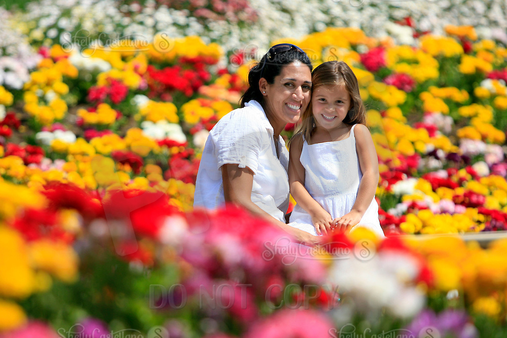 28 March 2008: Mother Christina and young daughter Kiera Brown sit amongst colorful flowers at The Flower Fields at Carlsbad Ranch in Southern California.  50 acres of giant Tecolote Ranunculus flowers bloom and transform the coastal hillside landscape into a solid expanse of vibrant banded color under blue skies.