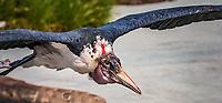 Marabout<br /> Considere comme l'un des plus importants parcs ornithologiques en Europe, le Parc des Oiseaux presente une collection d'oiseaux exceptionnelle de plus de 3000 individus, representant pres de 300 especes originaires de tous les continents.<br /> Exclusivites: Le spectacle d'oiseaux en vol, tous les jours, est un veritable festival de couleur