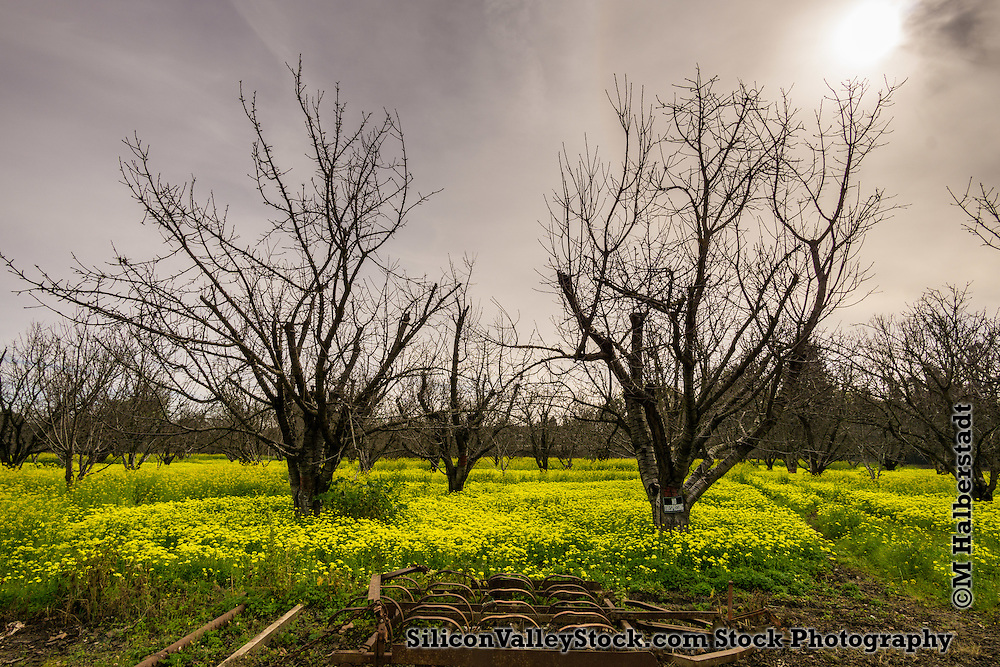 Farmland in Silicon Valley- Sunnyvale