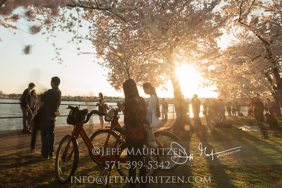 Tourists enjoy walking among the cherry blossom trees at sunset on the Tidal Basin in Washington, D.C..