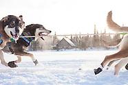 Tustumena 200, sled dog race
