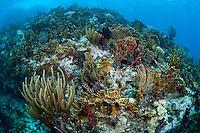 Healthy Soft Corals and Sponges..Shot in British Virgin Islands