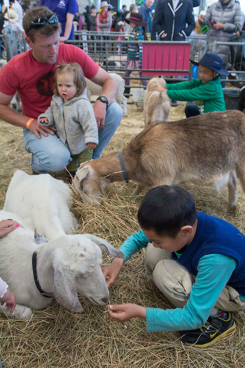 Children with goats in the City Farmyard display at the Canterbury A&amp;P Show, Christchurch, New Zealand, Friday, 13 November, 2015.<br /> Credit:SNPA / David Alexander