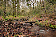 Tree-lined stream running through Holford Combe on the Northern flanks of the Quantock Hills in Somerset, England.
