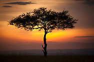This is Africa - Acacia Tree - Masai Mara Game Reserve, Kenya, Africa: This image of a lone Acacia tree was photographed at sunset in the Masai Mara Game Reserve. The Masai Mara is a large game reserve in south-western Kenya, which is effectively the northern continuation of the Serengeti National Park in Tanzania. Edition on 100 EXP0326