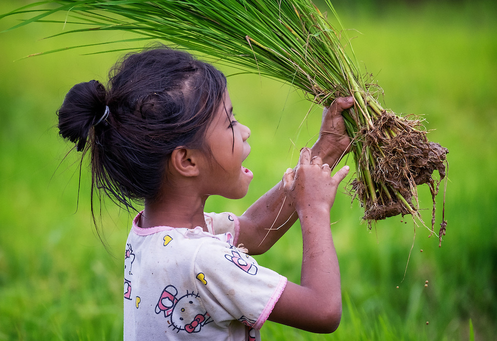 A young Thai girl helps her parents plant rice in Nakhon Nayok, Thailand. PHOTO BY LEE CRAKER