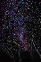 The Milky Way seems to explode from the gap in the standing dead trees. Falls Creek, Australia