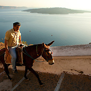 Donkeys of Santorini, Greece. Les anes de Santorin, Grèce.