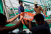 Sept. 27, 2009 -- PATTANI, THAILAND:  Workers off load a fishing boat in the fishing port of Pattani, Thailand, Sept 27.  Fishing is the main industry in Pattani, one of just three Thai provinces with a Muslim majority. Thousands of people, mostly Buddhist Thais and Burmese Buddhist immigrants, are employed in the fishing industry, either crewing ships, working in processing plants or working in the ship building and refreshing yards.  Photo by Jack Kurtz / ZUMA Press