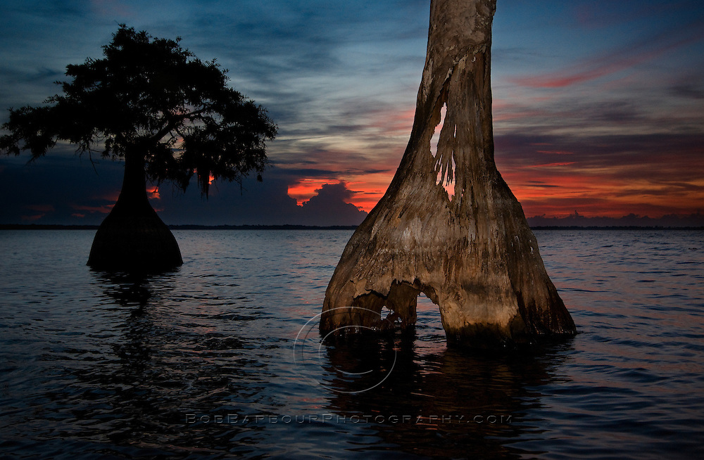 Cypress tree shines at Blue Cypress Lake, Florida