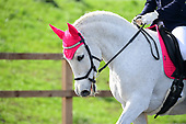 22 - 25th Mar - Ride For Reseach Dressage