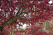 Terceiros church, in Braga's center, with full bloom flowers in the trees nearby
