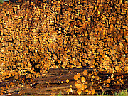 Stockpile of logs at a lumbermill
