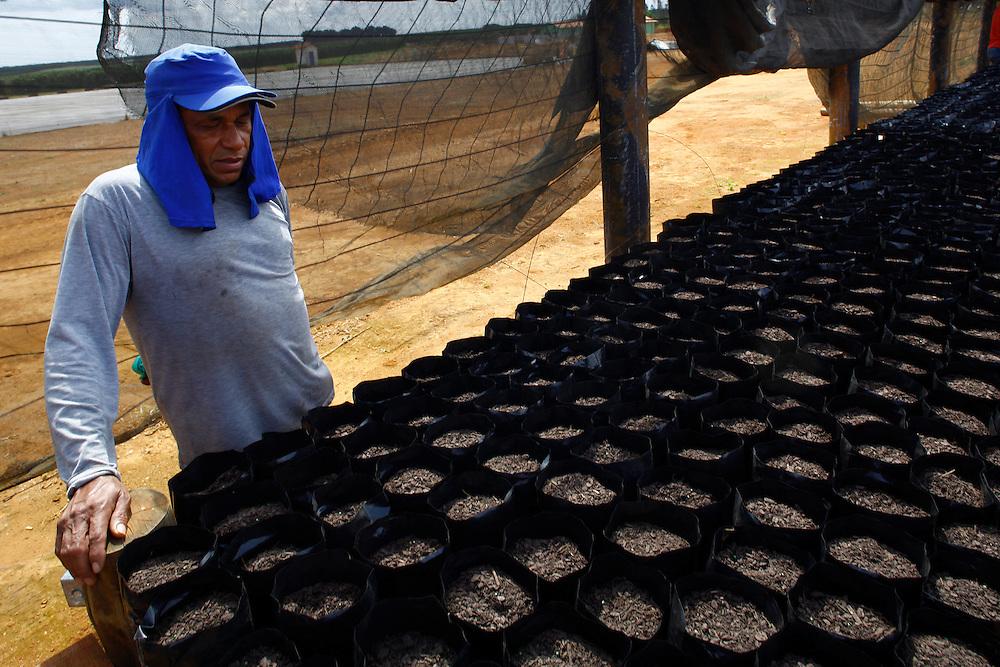 Sao Gotardo_MG, 29 de abril de 2015<br /> <br /> Fotos de mudas de abacate na regiao de sao gotardo.<br /> <br /> Foto: MARCUS DESIMONI / NITRO