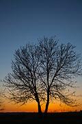 Winter tree, bare tree, sunset, Sandhills, Nebraska, Burwell, Calamus Outfitters
