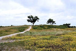 Yellow Field and Trees, Fort Fisher, North Carolina