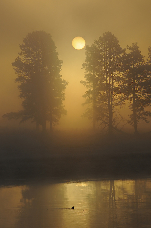 On an early September morning the sun, obstructed by fog, rises above Alum Creek in Yellowstone National Park.