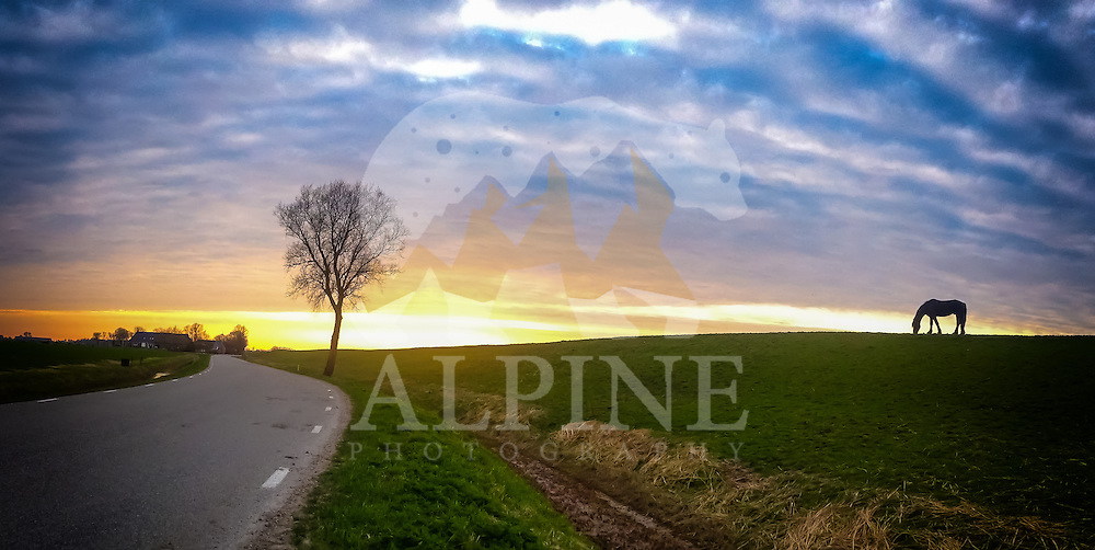 A panoramic view of the silhouette of a black horse, as seen eating grass in the twilight, next to a countryside road in the north of the Netherlands.