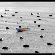 Tending the Mussel Beds