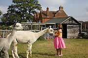 Charlotte, 6, feeding the alpacas at Hares Farm. CREDIT: Vanessa Berberian for The Wall Street Journal<br /> UKFARM-Hares Farm