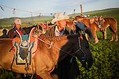 Mongolia: A glimpse