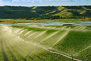 Irrigating potatoes in the Qu' Appelle Valley<br /> Craven<br /> Saskatchewan<br /> Canada