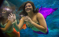 August 14, 2017 - Sao Paulo, Brazil - Visitors watch several mermaids while they swim in a giant tank during a show at an aquarium in Sao Paulo, Brazil, on August 14, 2017. (Credit Image: © Cris Faga/NurPhoto via ZUMA Press)