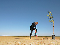 Businessman planting tree in desert