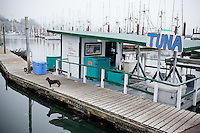 Dogs on boats on the dock at Newport Bay harbor in Newport, Oregon