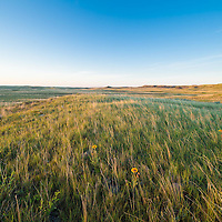 wildlife flowers spring to life on the montana prairie