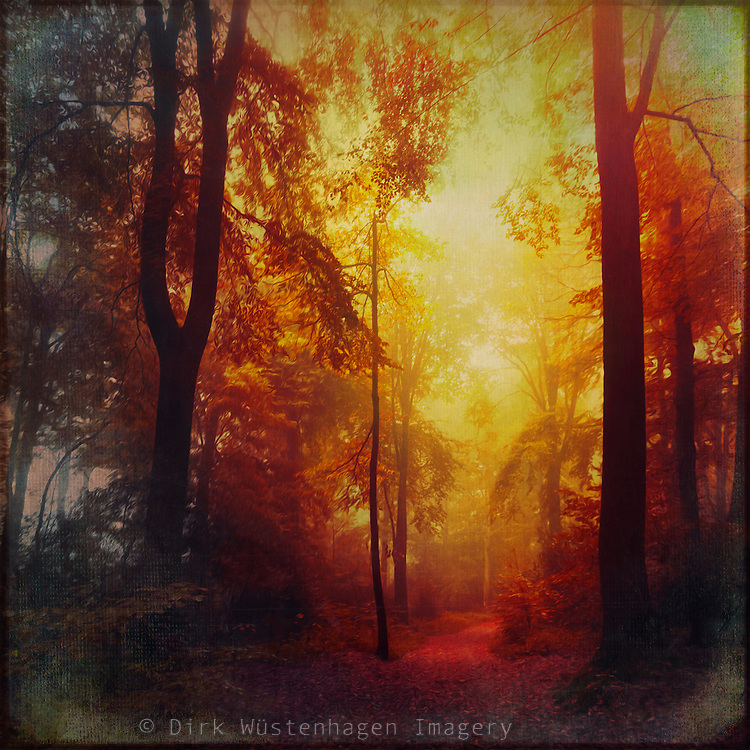Colorful hazy  forest in morning light - manipulated photograph<br /> <br /> Prints &amp; more with this design:<br /> http://society6.com/DirkWuestenhagenImagery/color-space_Print#1=45