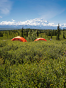 View of Denali, the Great One from the Wonder Lake Campground, Denali National Park, Alaska.