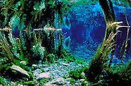 New Zealand underwater Lakes, Springs & Rivers
