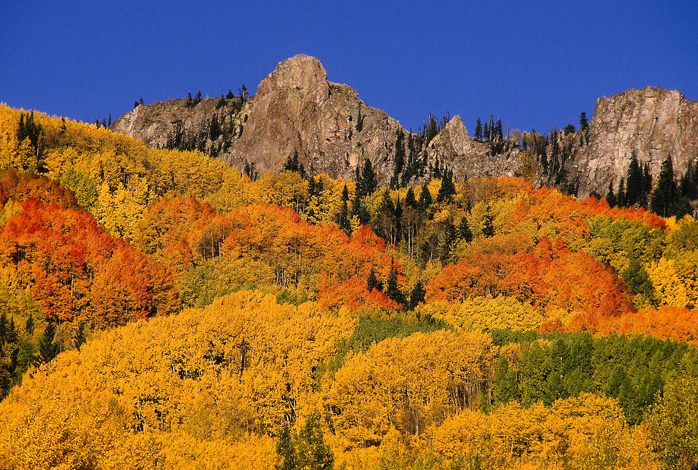 Autumn aspens below Ruby Mountains, Ragged Wilderness, Kebler Pass, Colorado