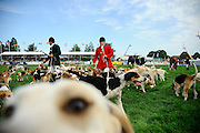 This was at the Royal Norfolk Show 2015 in the main ring and wanted to get a dog's eye view of when the public are allowed in to get closer the the Fox Hounds. I didn't expect to get this close but getting photobombed by the dog helps to make the picture.<br /> <br /> Picture: MARK BULLIMORE